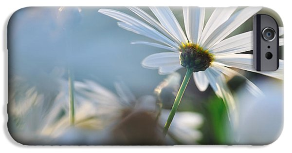 Daisy Bud iPhone Cases - Late Sunshine on Daisies iPhone Case by Kaye Menner