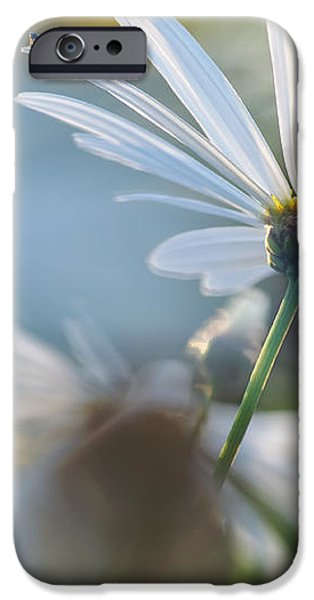Late Sunshine on Daisies iPhone Case by Kaye Menner