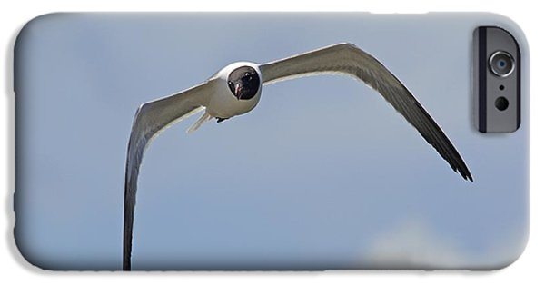 Flying Seagull iPhone Cases - Laughing Gull iPhone Case by Kenneth Albin