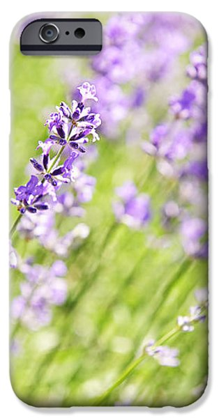 Lavender blooming in a garden iPhone Case by Elena Elisseeva