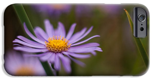 Floral Photographs iPhone Cases - Lavender Gerbera iPhone Case by Mike Reid