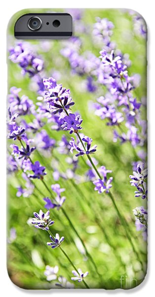 Lavender in sunshine iPhone Case by Elena Elisseeva