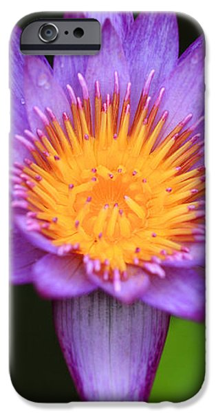 Lavender Waterlily iPhone Case by Cheryl Young