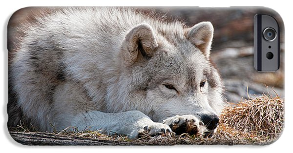 Wolf Pics Mixed Media iPhone Cases - Lazy Days iPhone Case by Michael Cummings