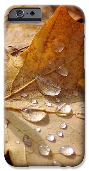 Leaf Doplets iPhone Case by LeeAnn McLaneGoetz McLaneGoetzStudioLLCcom