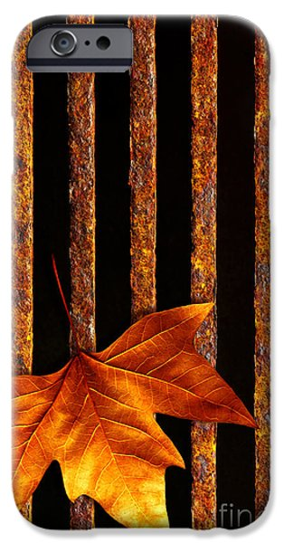 Grid Photographs iPhone Cases - Leaf in drain iPhone Case by Carlos Caetano