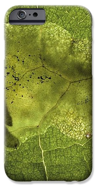 Leaf Miners In A Dock Leaf iPhone Case by Vaughan Fleming
