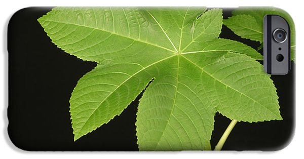 Flora iPhone Cases - Leaf Of Castor Bean Plant iPhone Case by Ted Kinsman