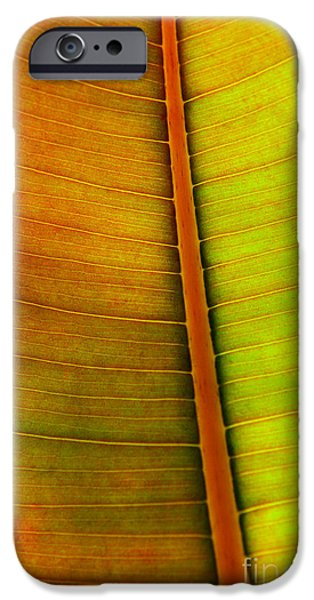 Flora Photographs iPhone Cases - Leaf Pattern iPhone Case by Carlos Caetano