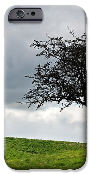 Leafless  iPhone Case by Semmick Photo