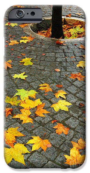 Autumn iPhone Cases - Leafs in Ground iPhone Case by Carlos Caetano