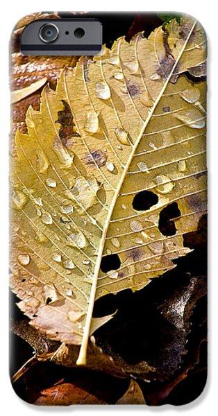 leafy tears iPhone Case by Burney Lieberman