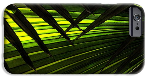 Palm Tree Greeting Cards iPhone Cases - Leaves of Palm Color iPhone Case by Marilyn Hunt