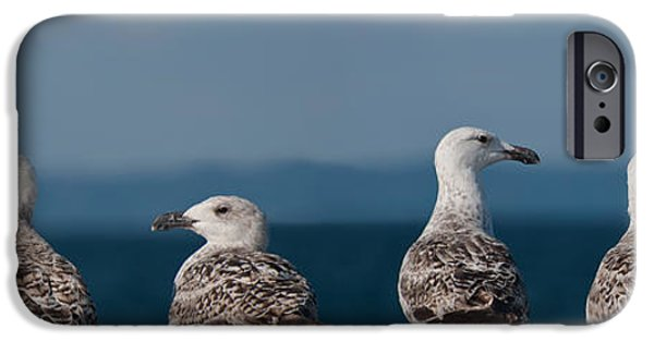 Sea Birds iPhone Cases - Left right left right iPhone Case by Michael Mogensen