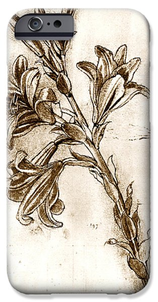 Pen And Ink Photographs iPhone Cases - Leonardo Da Vincis Lilies. iPhone Case by Sheila Terry