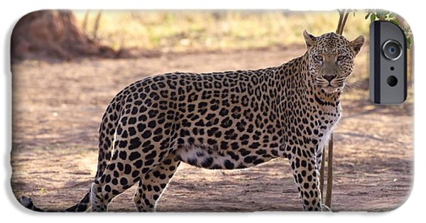 Large Cats iPhone Cases - Leopard iPhone Case by Keith Levit
