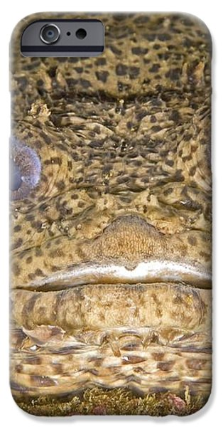 Leopard Toadfish iPhone Case by Clay Coleman