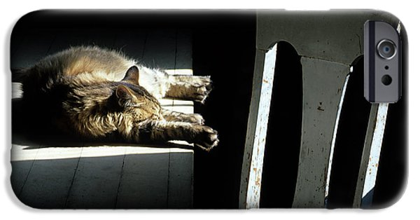 Bob Cats iPhone Cases - Let Sleeping Cats Lie iPhone Case by Bob Christopher