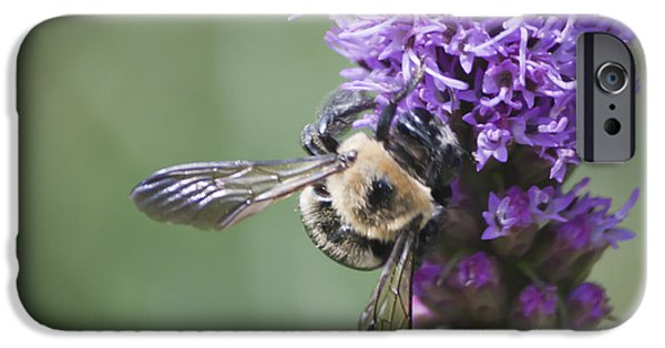 Disc iPhone Cases - Liatris and Bee Squared 1 iPhone Case by Teresa Mucha