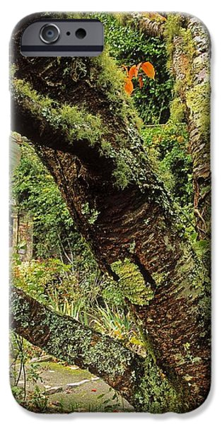 Lichen Covered Apple Tree, Walled iPhone Case by The Irish Image Collection