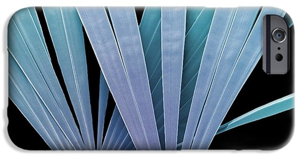 Diatoms iPhone Cases - Licmorpha Freshwater Diatom, Sem iPhone Case by Steve Gschmeissner