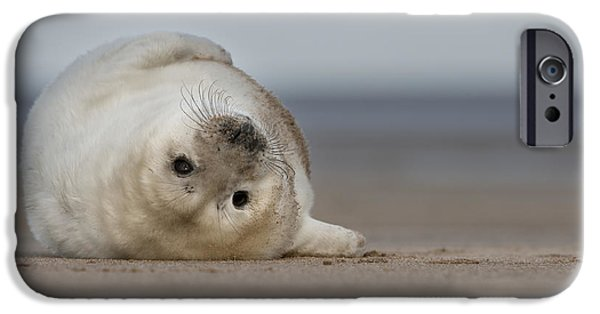 Ocean Mammals iPhone Cases - Lifes A Beach iPhone Case by Andy Astbury