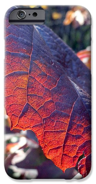 light of the lifeblood iPhone Case by Trish Hale