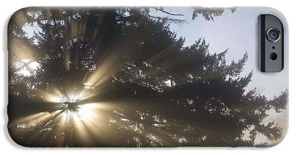 United iPhone Cases - Light Through Tree, Willamette Valley iPhone Case by Craig Tuttle