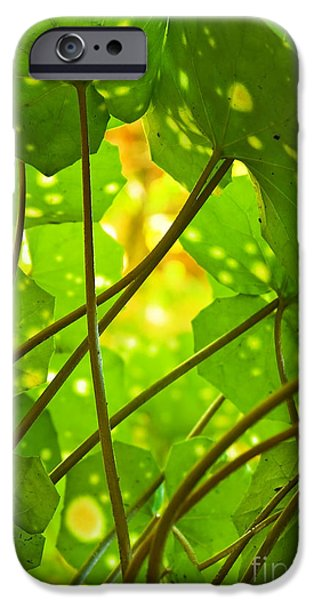 Flora iPhone Cases - Ligularia Tussilaginea iPhone Case by Carlos Caetano