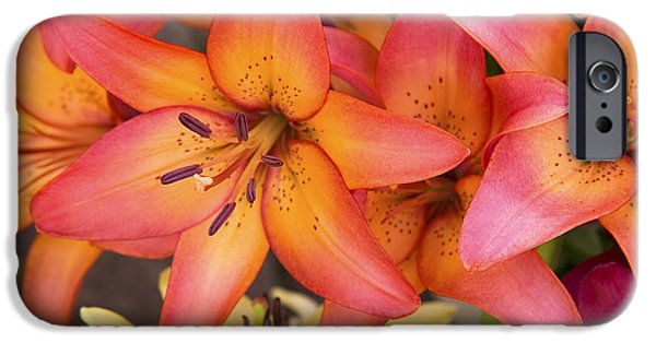 Lilium iPhone Cases - Lilies background iPhone Case by Jane Rix