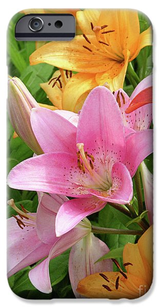 Limelight iPhone Cases - Lilies (lilium Sp.) iPhone Case by Tony Craddock