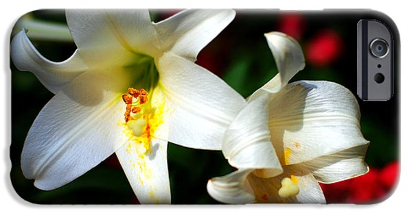 Lilium iPhone Cases - Lilium longiflorum flower iPhone Case by Paul Ge