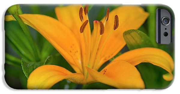 Lilium iPhone Cases - Lily Flower (lilium Sp.) iPhone Case by Dr Keith Wheeler