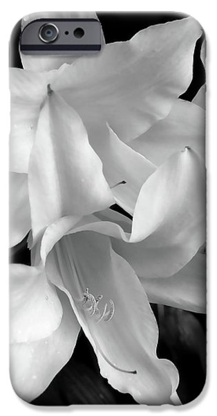 Lily Flowers Black and White iPhone Case by Jennie Marie Schell