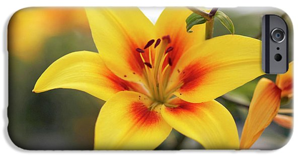 Asiatic Lily iPhone Cases - Lily (lilium cheope) iPhone Case by Dr Keith Wheeler