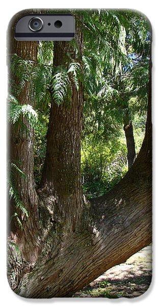 Limbs to Trees iPhone Case by Nick Kloepping