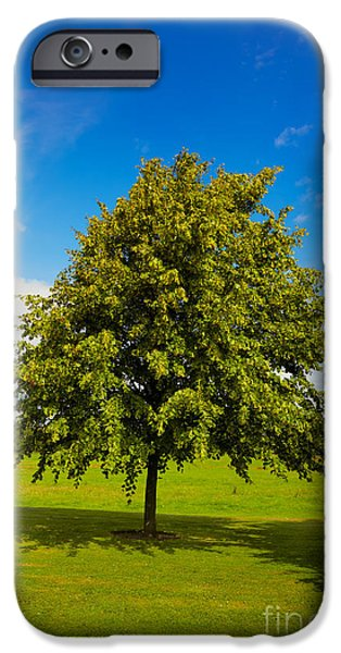 Lime tree in summer iPhone Case by Gabriela Insuratelu