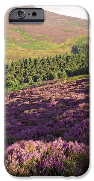 Summer iPhone Cases - Ling Heather (calluna Vulgaris) iPhone Case by Duncan Shaw