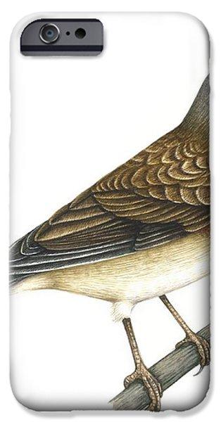 Linnet, Artwork iPhone Case by Lizzie Harper