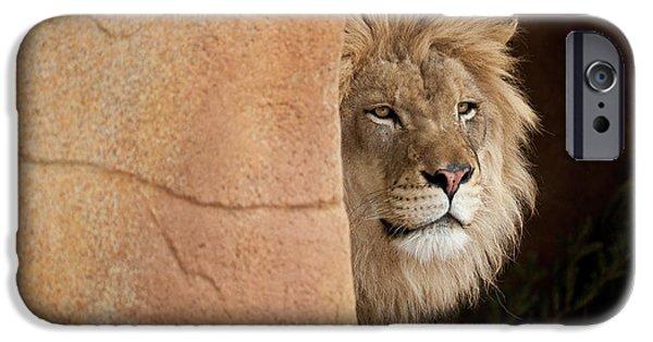 Zoo Animal iPhone Cases - Lion Emerging    captive iPhone Case by Steve Gadomski