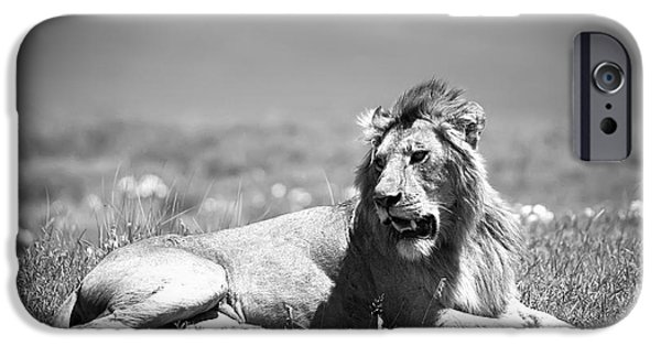 National Parks iPhone Cases - Lion King in Black and White iPhone Case by Sebastian Musial