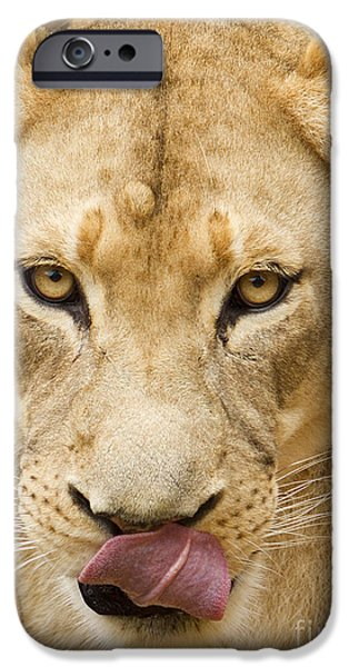 Hungry iPhone Cases - Lioness iPhone Case by Dustin K Ryan