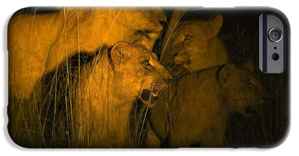 Large Cats iPhone Cases - Lions At Night iPhone Case by Carson Ganci