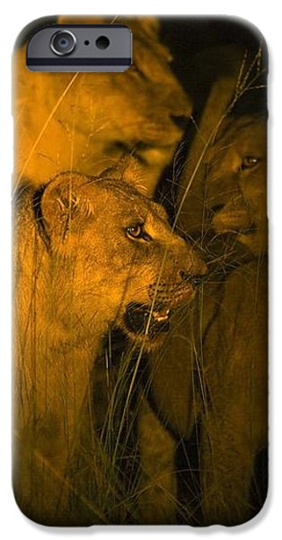 Lions At Night iPhone Case by Carson Ganci