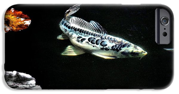 Butterfly Koi Photographs iPhone Cases - Little Blue Cruising iPhone Case by Don Mann