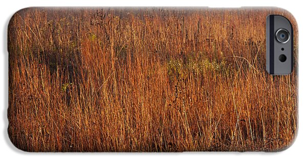 Prairie iPhone Cases - Little Bluestem Grasses On The Prairie iPhone Case by Steve Gadomski