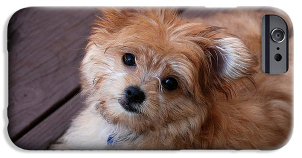 Dog Photograph Canvas iPhone Cases - Little Darling iPhone Case by Angie Tirado