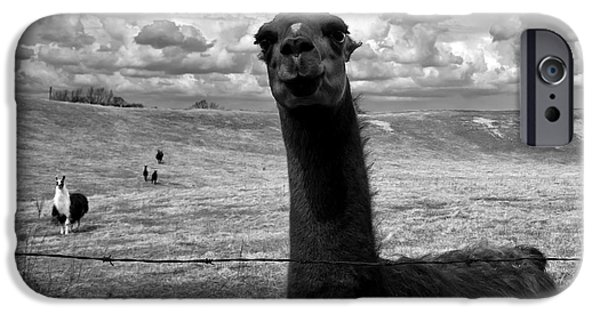 Field. Cloud iPhone Cases - Llama iPhone Case by Cale Best