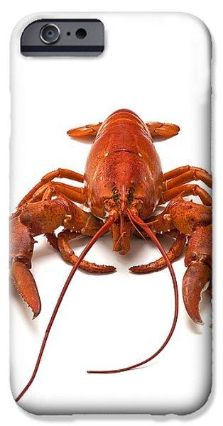 Lobster iPhone Case by David Nunuk