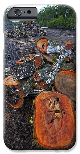 Rhizophora Mangle iPhone Cases - Logged Red Mangrove Rhizophora Mangle  iPhone Case by Christian Ziegler